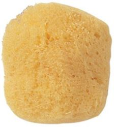 Picture of Sea Sponge